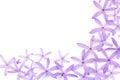 Petrea flowers queen s wreath sandpaper vine purple wreath on white Royalty Free Stock Photography