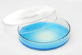 Petri dish Royalty Free Stock Photo