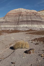Petrified forest national park badland log in the south of Stock Photo
