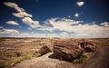 Petrified forest national park during sunny day arizona Stock Photos