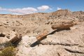 Petrified forest patagonia argentina desert brown Stock Photography