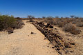 Petrified forest tree from khorixas namibia Stock Photo
