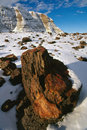 Petrified Forest in Winter Royalty Free Stock Photos