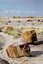 Petrified forrest in Arizona Royalty Free Stock Images