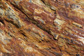 Petrified wood Stock Images