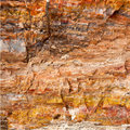 Petrified wood detail Royalty Free Stock Images