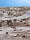 Petrified wood logs scattered across landscape, Petrified Forest National Park, Arizona, USA Royalty Free Stock Photo