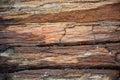 Petrified wood texture Royalty Free Stock Photo