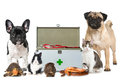 Pets with first aid kit Royalty Free Stock Photo