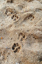 Pets footprint