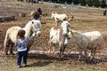Petting farm animals Royalty Free Stock Photo