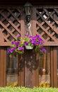 Petunia flower  and street lantern Royalty Free Stock Photo