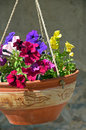 Petunia flowerpot hanging clay pot with colorful flowers Stock Image