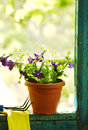 Petunia flowers on garden house verandah Royalty Free Stock Images