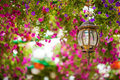 Petunia flowers and lantern in  park Royalty Free Stock Photo