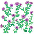 Petunia  flowers set
