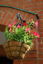Petunia hanging cache-pot Royalty Free Stock Photo