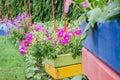 Petunia or petunia hybrida vilm in the garden nature park Stock Photos