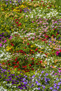 Bed Of Colourful Flowers
