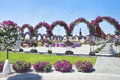 Petunias in the miracle garden and arches dubai Royalty Free Stock Image