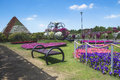 Petunias in the miracle garden dubai Stock Image