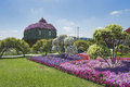Petunias in the miracle garden dubai Royalty Free Stock Photography