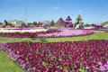 Petunias in the miracle garden and sculpture of cow dubai Stock Photography
