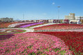 Petunias in the miracle garden and sculpture of cow dubai Stock Images