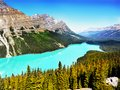 Peyto Lake, Banff National Park, Canadian Rockies Royalty Free Stock Photo