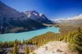 Peyto Lake, Banff National Park, Rocky Mountains, Alberta, Canad Royalty Free Stock Photo