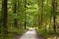 Pfad im Wald mit schönen Bäumen Lizenzfreie Stockfotografie