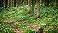 Pfad im Wald mit Windflower Lizenzfreie Stockfotos