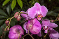 Phalaenopsis orchid photographed in april in frankfurt main germany Stock Photos