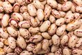 Sugar Bean legume. Closeup of grains, background use. Royalty Free Stock Photo