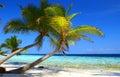 Fenomenálny pláž palma stromy a vták