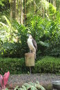 Philippine eagle Royalty Free Stock Photo