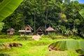 Philippine traditional village in green gungle Stock Photo