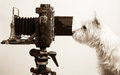 Pho Dog Grapher at work in photography studio Stock Images