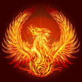 The phoenix illustration with burning drawn in heraldic style Stock Image