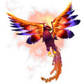 Phoenix rising the firebird is a mythical symbol of regeneration or renewal of life Royalty Free Stock Image