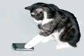Telefonovanie mačka