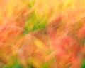 Photo art bright colorful light streaks abstract background in orange and green colors Stock Photo