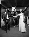 Photo of bride and groom holding horse by rein at stable Stock Images