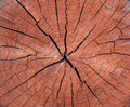 Photo of a brown texture of a cross section of tree