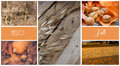 Photo collage, autumn, dry colorful leaves, orange, yellow, pumpkin, walnuts, oats, straw, meadow, park, city, countryside, sticke Royalty Free Stock Photo