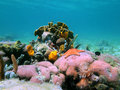 Photo of a colorful coral reef caribbean sea panama Royalty Free Stock Images