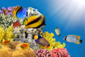 Photo of a coral colony on a reef top Royalty Free Stock Photo