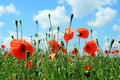 Photo field poppies clouds Stock Photography