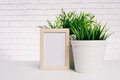 Photo frame and house plant Royalty Free Stock Photo