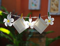 Photo Frames on Rope with flower Royalty Free Stock Photo